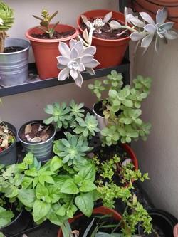Succulentes en super forme!