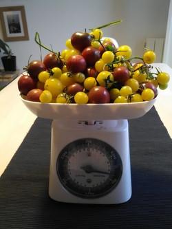2nde récolte à 0,8kg