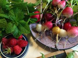 Récolte radis & Framboises