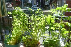 Cultiver sur terrasse