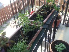 Dans quel genre de pot planter mes fleurs, mes plantes et légumes?