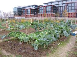 Cultiver à Saint-Ouen