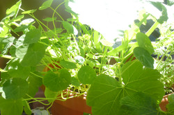 Mélange fleurs- légumes