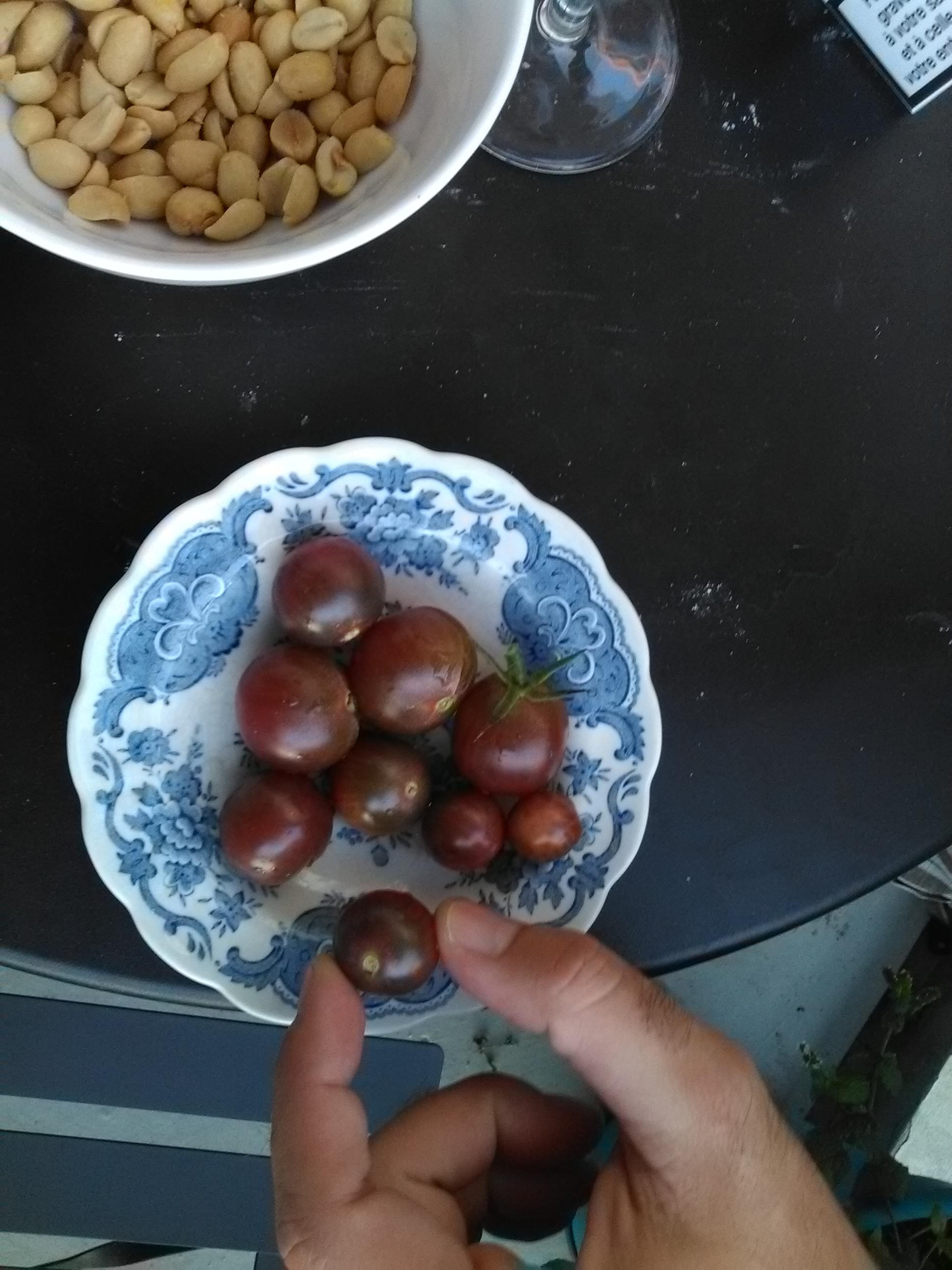 Apéro tomates