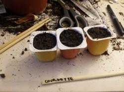 Je plante!