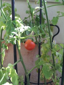 Cultiver sur balcon