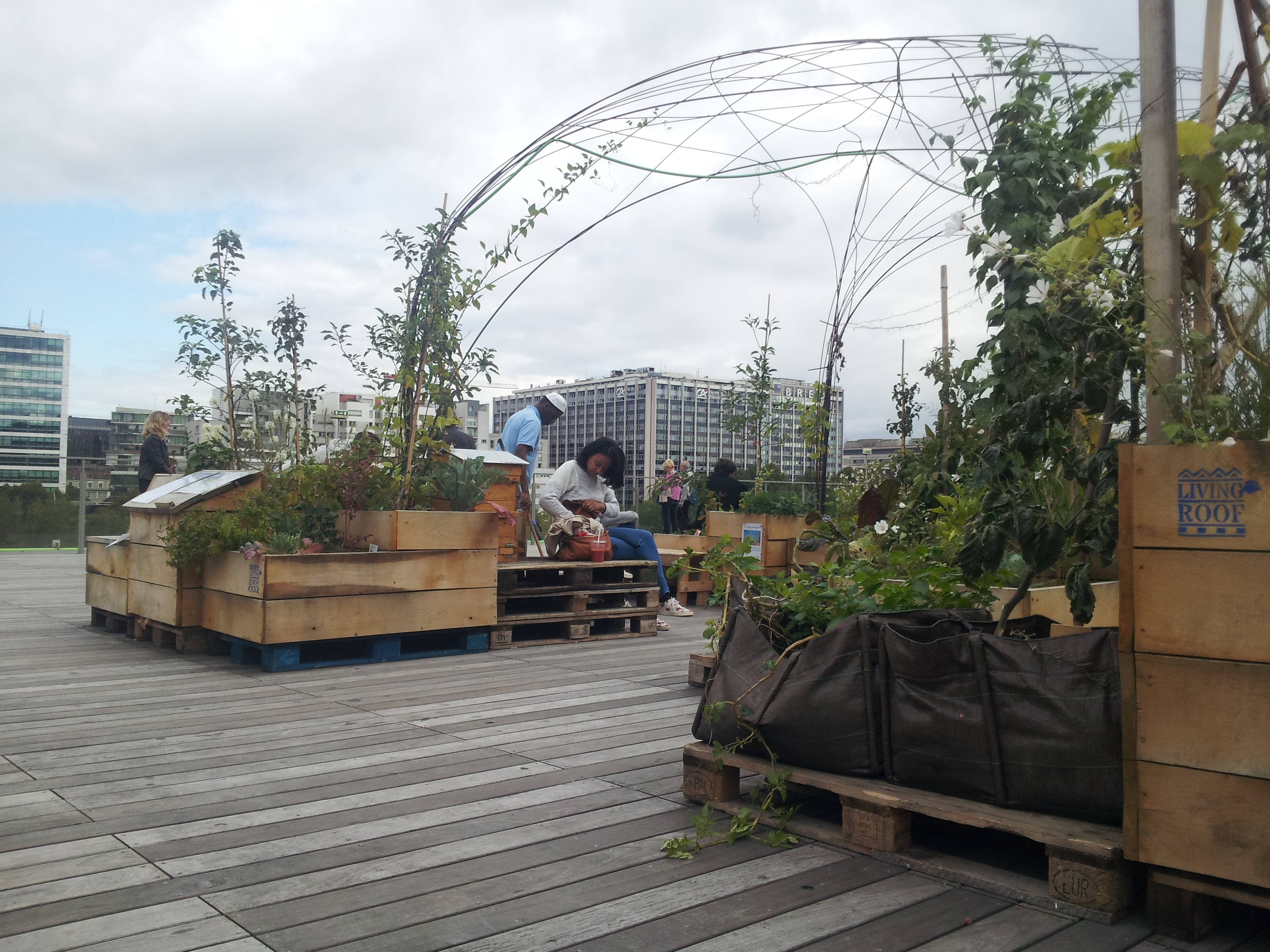 Basilic_en_ville_Living_Roof