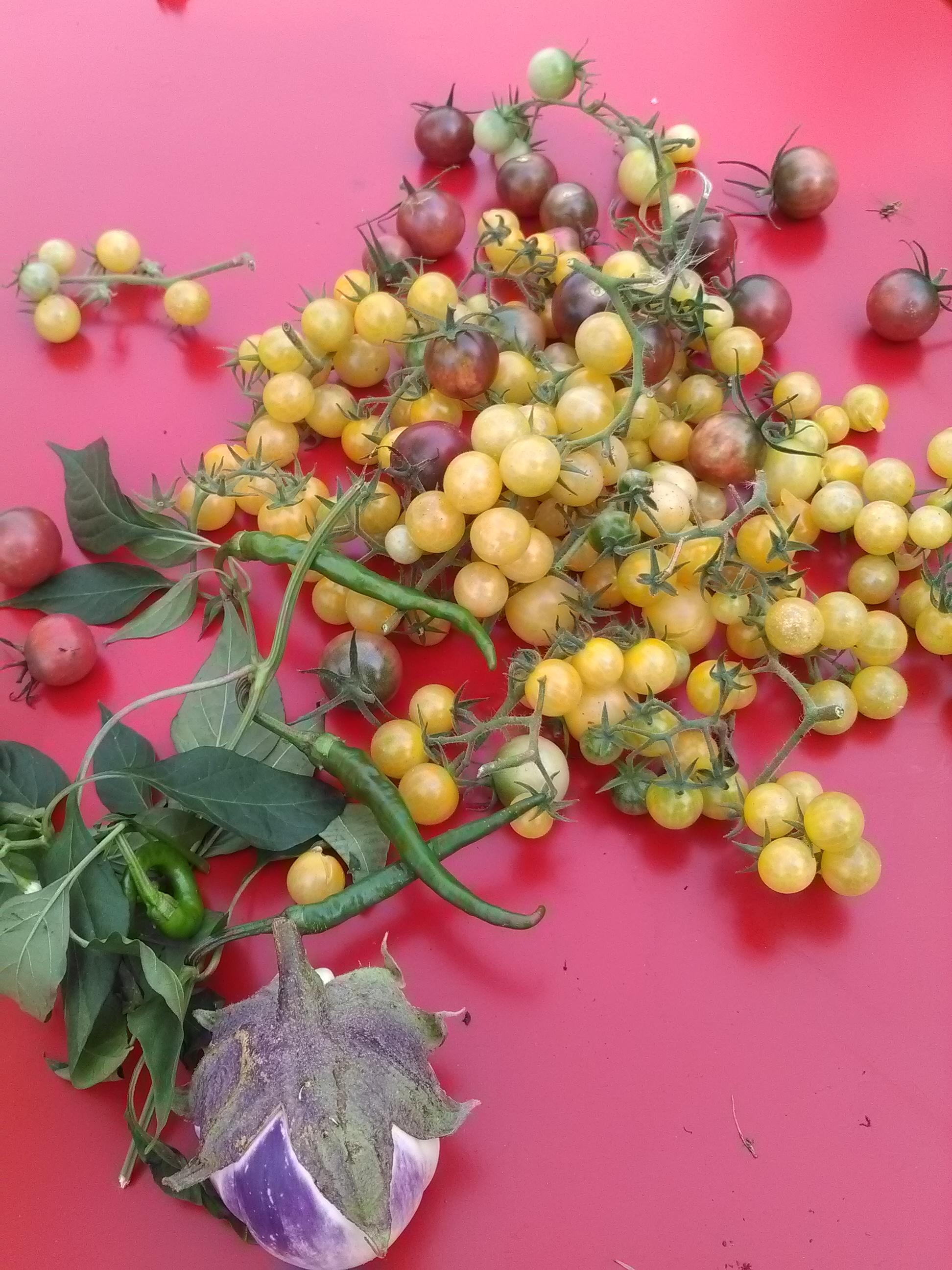 1 ère récolte #madeinmob