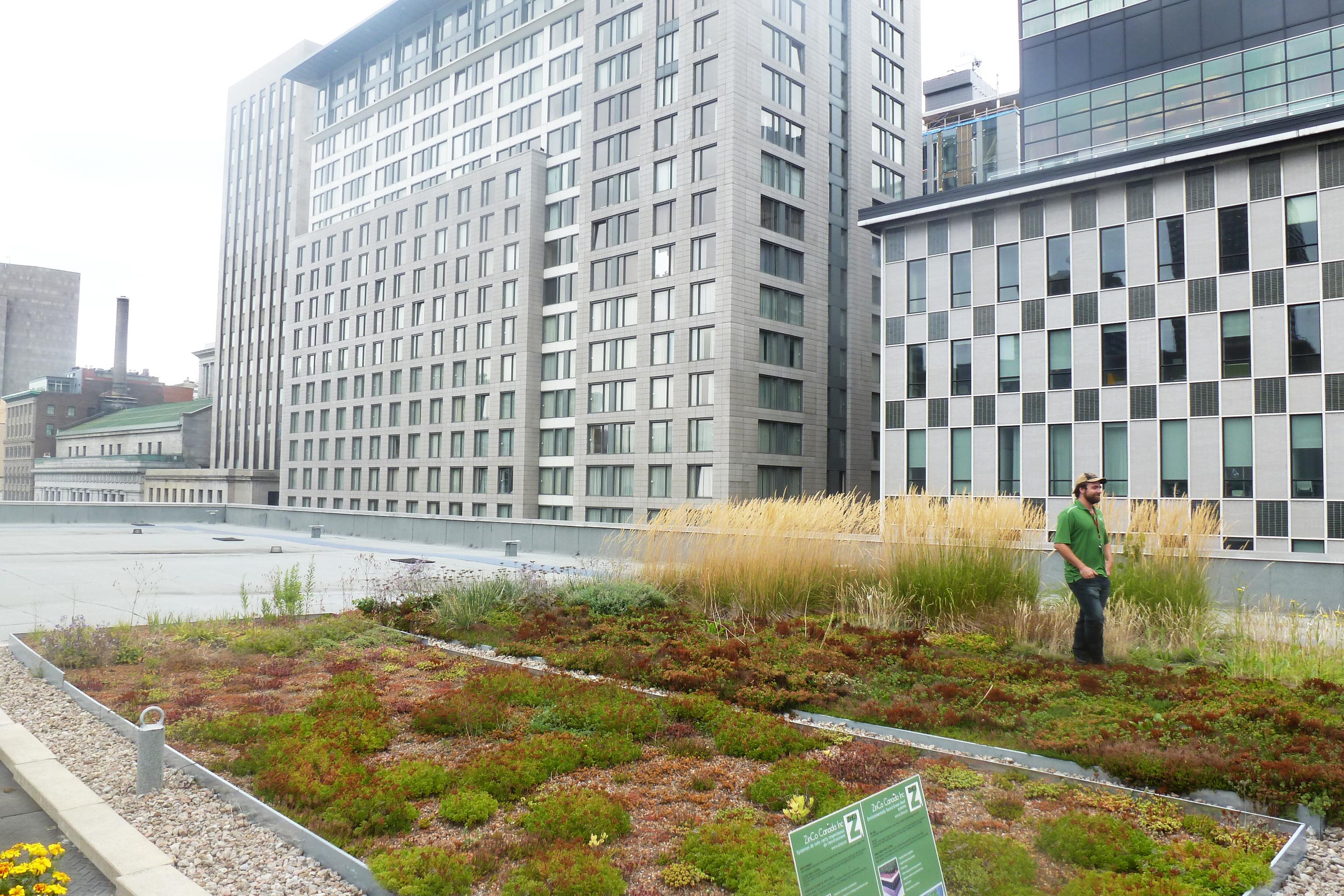 Sur toit avec Ligne Verte