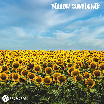 Yellow Sunflower Final.jpg