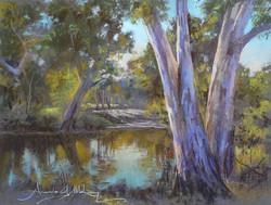 Billabong, Wonga Wetlands, Murray