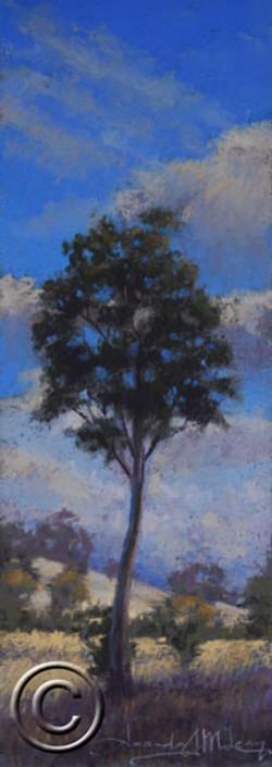 Summer Tree Study