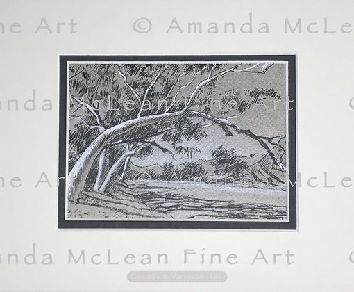 Ross River Gums N.T. Small Matted Print