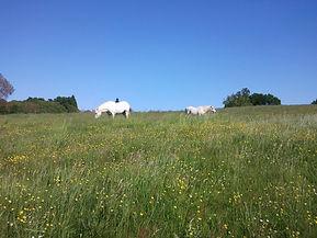 PoneyClub La ronde des poneys