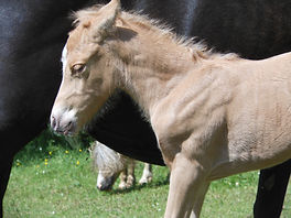 Equitation enfant Poneys Poney