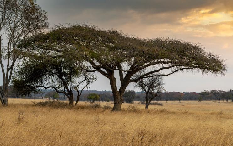 trees-5840571.jpg