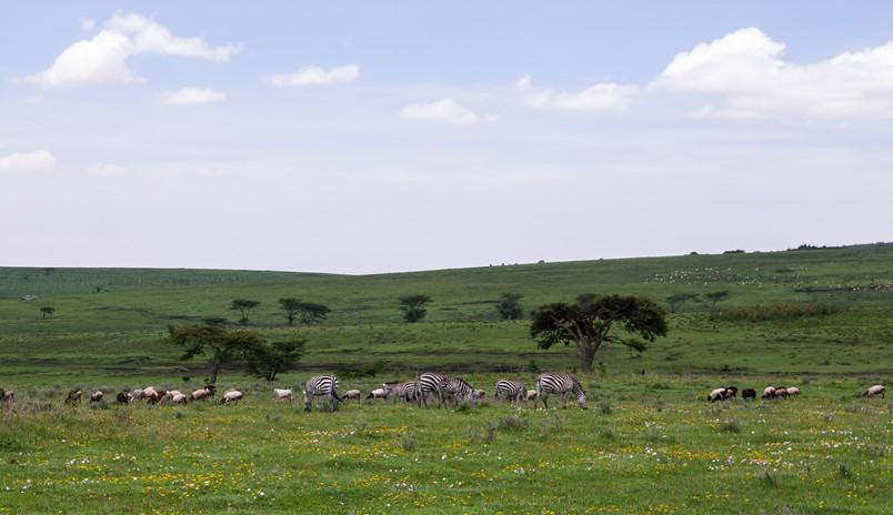 ngorongoro-conservation-area-2735631.jpg