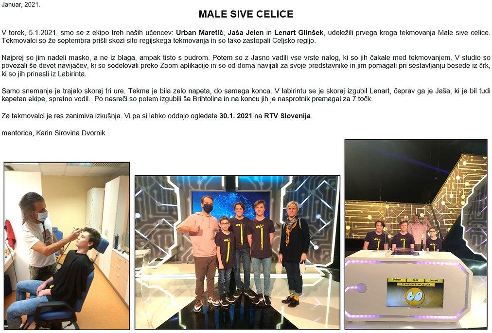 Male%20sive%20celice_edited.jpg