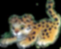 leopard_bg.png
