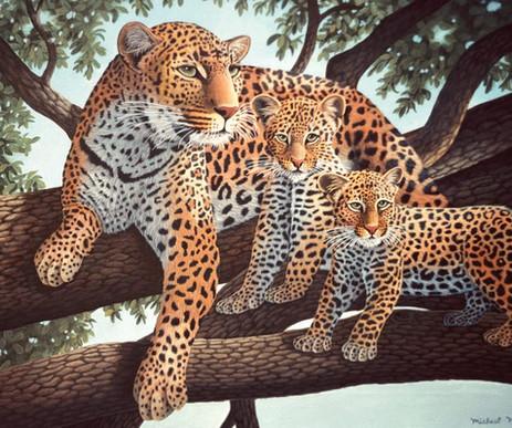 leopard12.jpg
