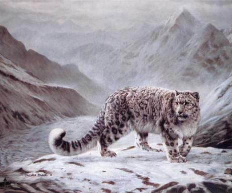 leopard05.jpg