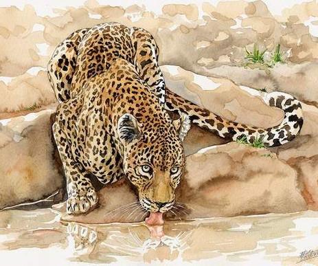 leopard06.jpg