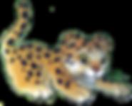 leopard_bg_flip.png