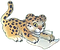 leopard_write_80.png