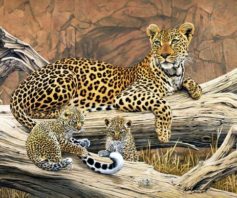 leopard14.jpg