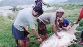 The Transboundary Interactions and Beliefs to Protect Aquatic Animals in the Mekong