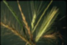Grass boquet.JPG