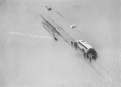 Verrast in polder Eendracht  1953