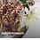 Thumbnail: Tarta de Tiramisú vasos