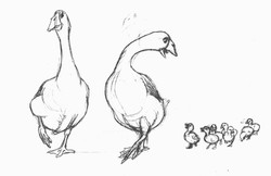 Gosfield Gallery Geese