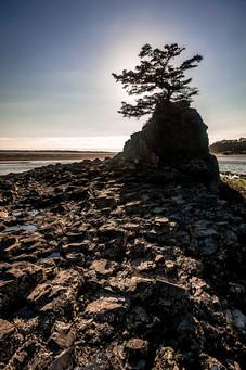 Pacific Northwest Beach Sillouhette