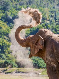 Elephants of Thailand Sunscreen