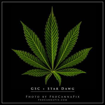 GSC-Star-Dawg.jpg