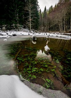 Pacific Northwest Ice Pond