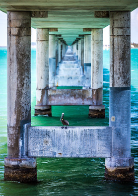 Key West Florida 7 Mile Pelican