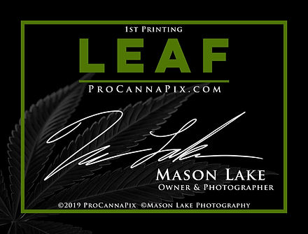 Leaf Series PHOTO Labels.jpg