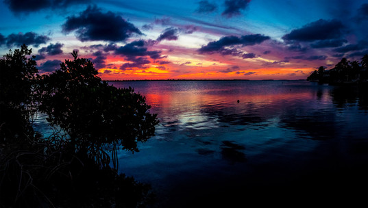 Key West Florida Mangrove Sunset