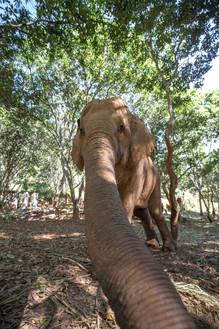 Elephants of Thailand Selfie