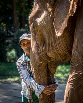 Elephants of Thailand Bond