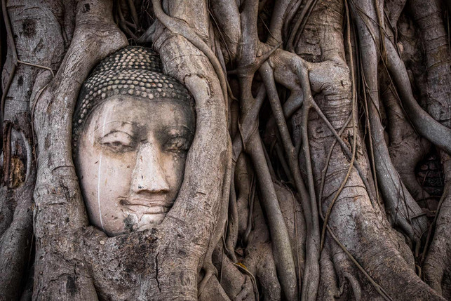Thiland Buddah Tree