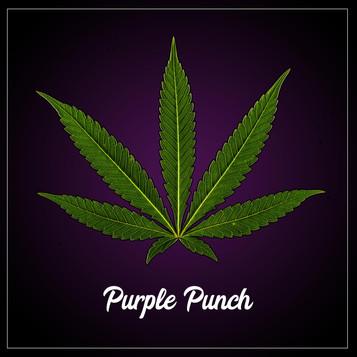 Purple-Punch-web-insta.jpg