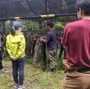 HUTTE(美郷町渡川):原木椎茸のほだ場視察