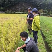HUTTE(美郷町渡川地区):有機栽培米の田んぼを視察