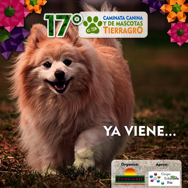 Caminta Canina y de Mascotas Tierragro Itagui