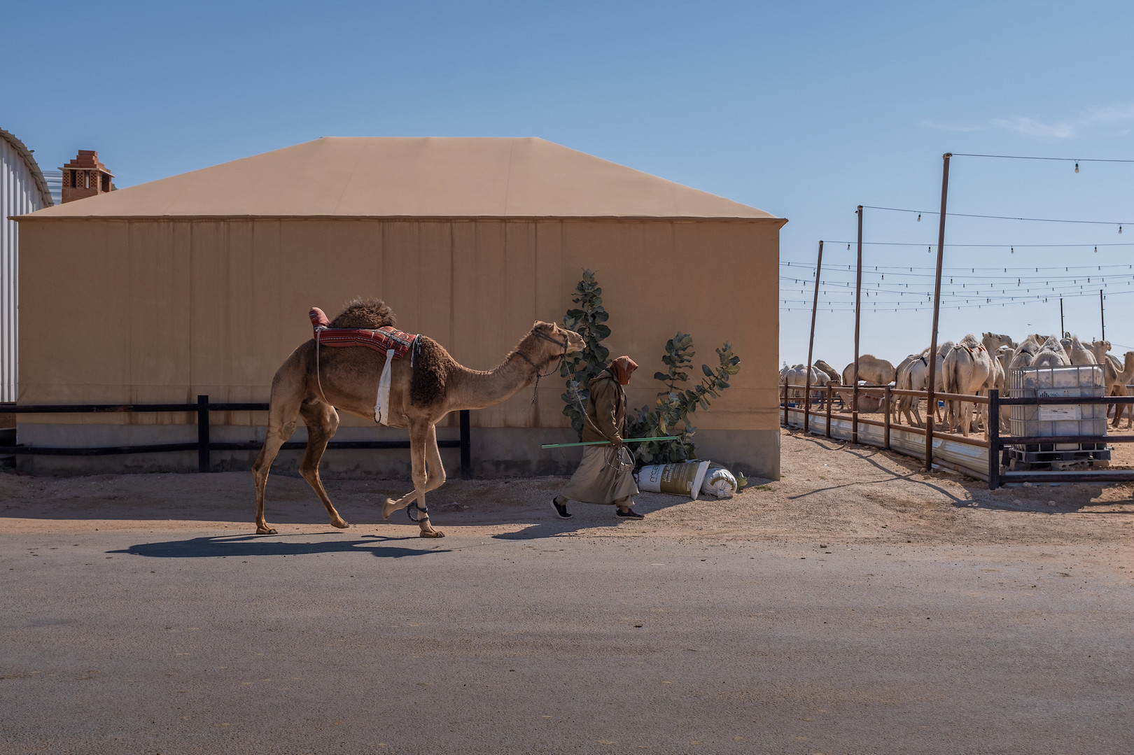 Camel Lovers