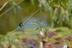 Dragonfly, Biltmore Gardens